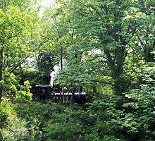 Arboreal Train by Francis Drake