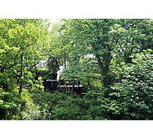 Arboreal Train Photographic Print