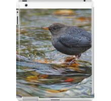 water ouzel, american dipper in stream iPad Case/Skin