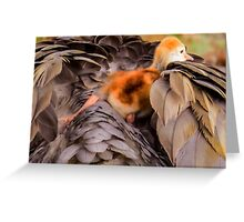 Looking for mother's warmth Greeting Card