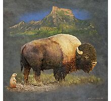 brief altercation - bison and prairie dog Photographic Print