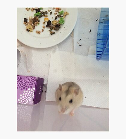 Hamster Face Photographic Print