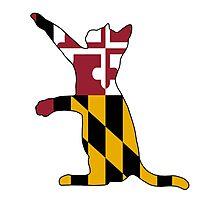Maryland Cat Photographic Print