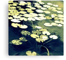 With Thoughts of Monet Canvas Print