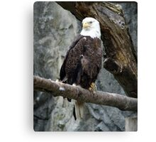 Lone Eagle Canvas Print