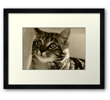 Hey mr. Orton... Don't I look charming in your effect?... Free State, South Africa Framed Print