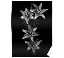Backyard Flowers In Black And White 7 Poster