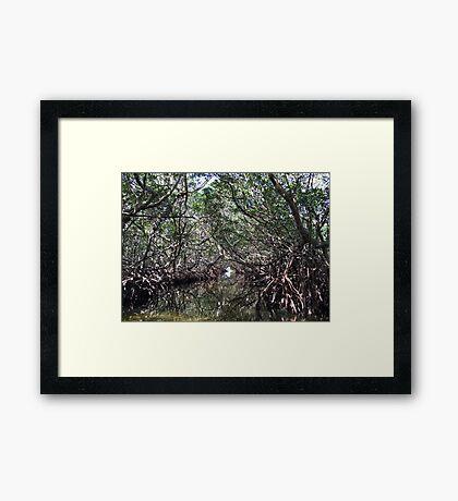 Mangroves Framed Print