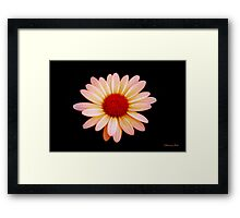 Painted the Color of Sunrise~ Daisy Framed Print