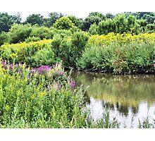 Wetlands in Summer Photographic Print