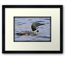 Loon Look Framed Print