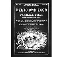 Nests and Eggs Photographic Print