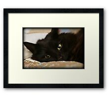 Little Fellow Framed Print