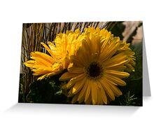 Three Sunshine Yellow Gerbera Daisies Greeting Card