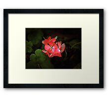 Flower out of the darkness Framed Print