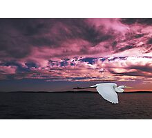 Great Egret at Sunset. Photo Art, Prints, Gifts. Photographic Print