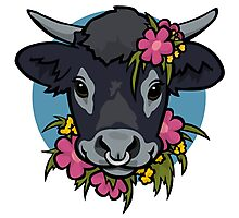 Ferdinand the Bull Photographic Print
