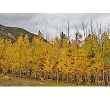 Fall in the Rockies #9 Photographic Print