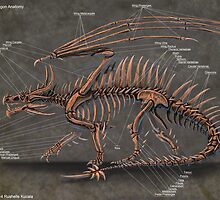 Western Dragon Skeleton Anatomy by Thedragonofdoom