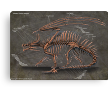 Western Dragon Skeleton Anatomy Canvas Print