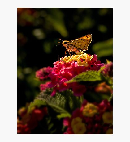 Skipper in the spotlight Photographic Print