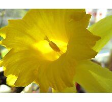 Spring Fanfare Photographic Print