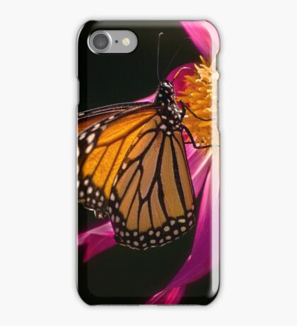 Monarch sipping dahlia nectar iPhone Case/Skin