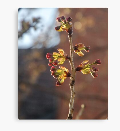 Buds Canvas Print