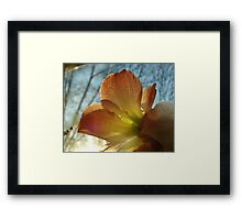 Amaryllis in the Window Framed Print