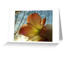 Amaryllis in the Window Greeting Card