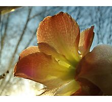 Amaryllis in the Window Photographic Print