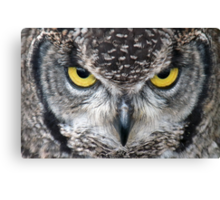 Look Into My Eyes: (African Spotted Eagle Owl) Canvas Print