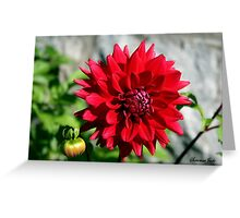 Autumn Dahlia ~ Shades of Red!  Greeting Card