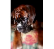 I'm Sorry  -Boxer Dogs Series- Photographic Print