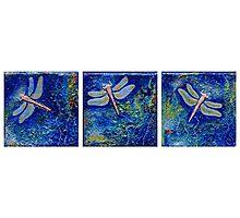 Three Dragonflies Photographic Print