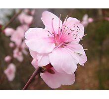 Nice and Pink Photographic Print
