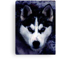 Siberian Dog Husky Canvas Print