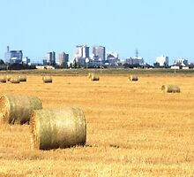 Hay! Look, it's Winnipeg! by Stephen Thomas