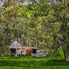 Old Shearing Shed by Bette Devine