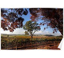 Barossa Autumn Landscape Australia Poster
