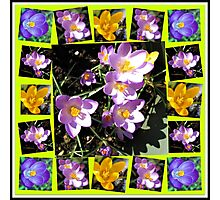 Cute Crocuses Collage Photographic Print