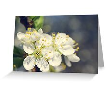 plum flowers blossoming in the spring Greeting Card