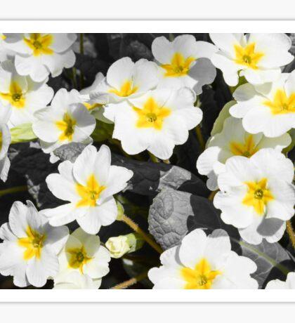 primrose Bush with white flowers Sticker