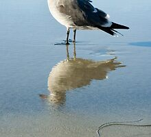Seagull at La Jolla Shores beach, La Jolla, California by Julia  Hiebaum