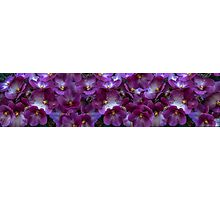 Wall decoration, mural, panorama, violet Photographic Print