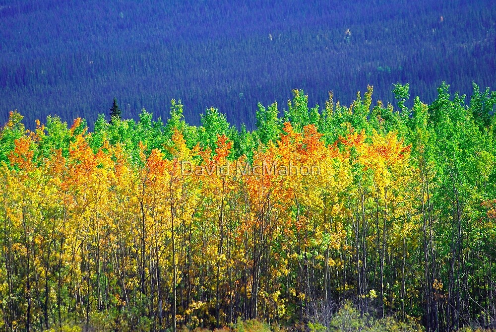 Canada's Fall Collection by David McMahon