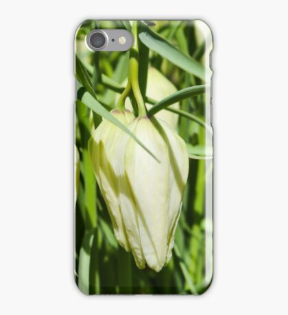 green white crown imperial flowers blooming in early spring closeup. (Fritillaria imperialis) iPhone Case/Skin
