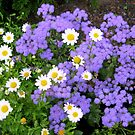 Dancing Daisies and Shrinking Violets by BlueMoonRose