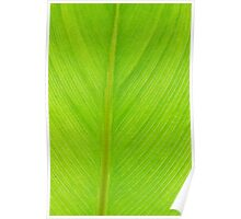 bright green fresh leaf closeup background vertical Poster