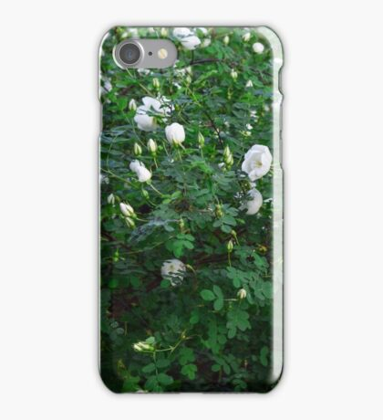 beautiful wild rose Bush with white flowers iPhone Case/Skin